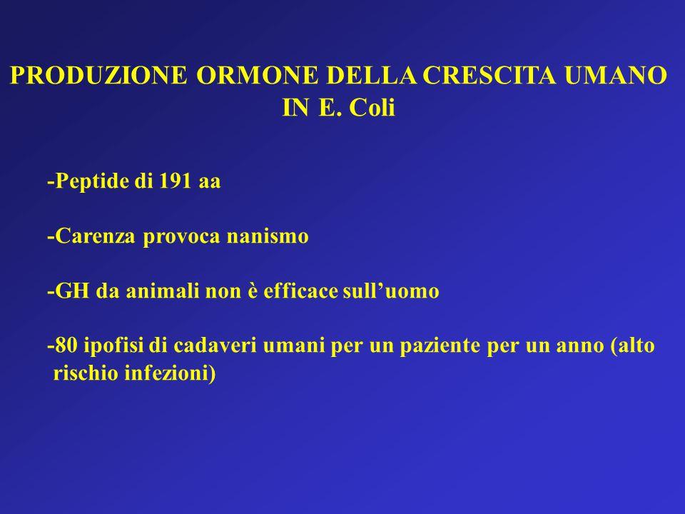 PRODUZIONE ORMONE DELLA CRESCITA UMANO IN E.