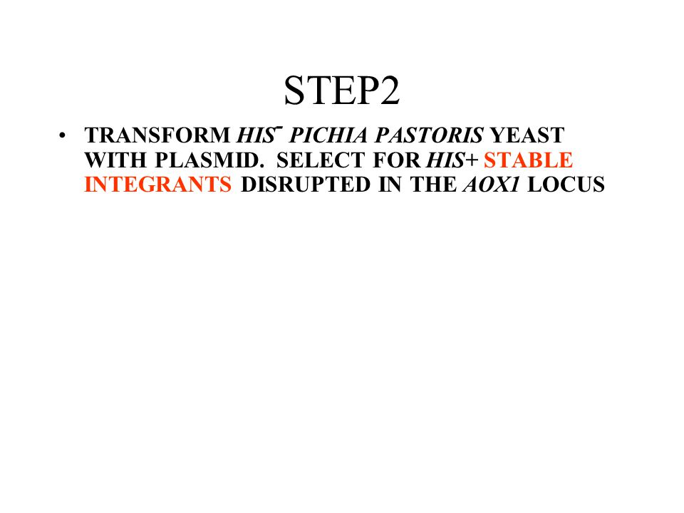 STEP2 TRANSFORM HIS - PICHIA PASTORIS YEAST WITH PLASMID. SELECT FOR HIS+ STABLE INTEGRANTS DISRUPTED IN THE AOX1 LOCUS