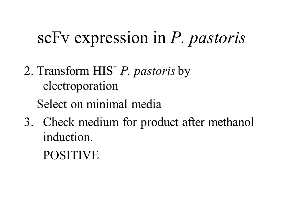 scFv expression in P. pastoris 2. Transform HIS - P. pastoris by electroporation Select on minimal media 3.Check medium for product after methanol ind