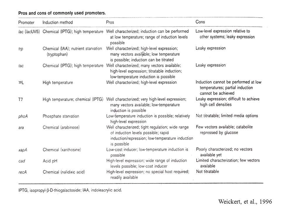 E.coli Expression Vector Selectable Marker Promoter Repressor E.