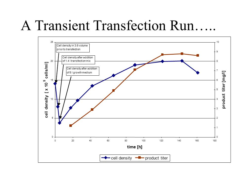 A Transient Transfection Run…..