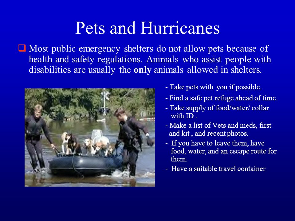 Pets and Hurricanes  Most public emergency shelters do not allow pets because of health and safety regulations. Animals who assist people with disabi