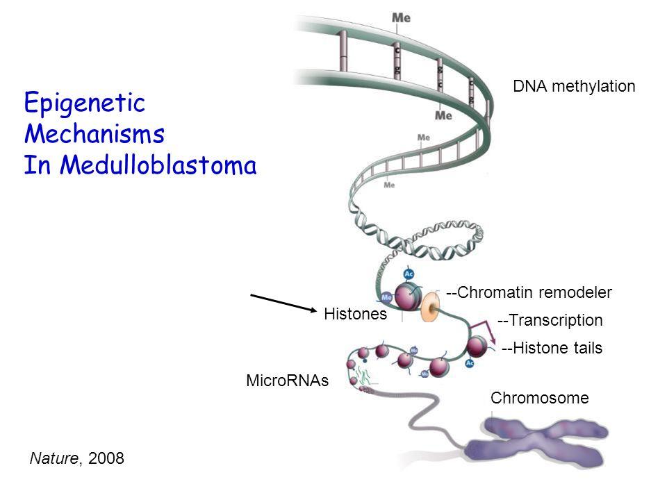 --Chromatin remodeler Histones --Transcription --Histone tails MicroRNAs Chromosome DNA methylation Epigenetic Mechanisms In Medulloblastoma Nature, 2008