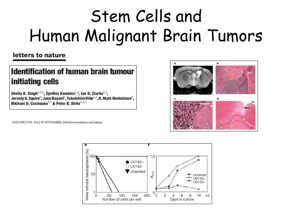 Stem Cells and Human Malignant Brain Tumors