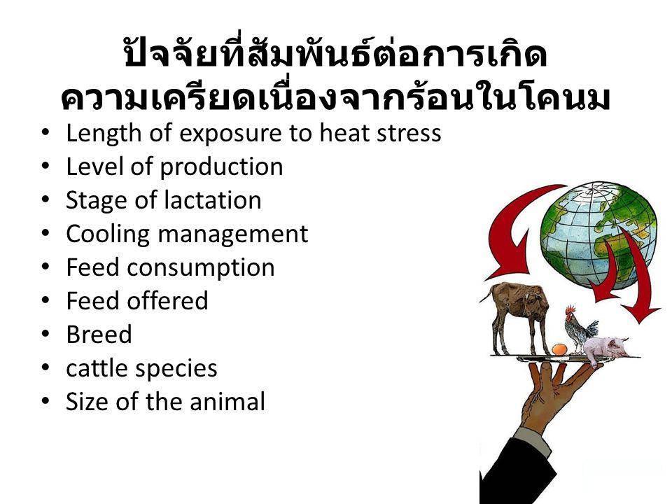 ปัจจัยที่สัมพันธ์ต่อการเกิด ความเครียดเนื่องจากร้อนในโคนม Length of exposure to heat stress Level of production Stage of lactation Cooling management Feed consumption Feed offered Breed cattle species Size of the animal