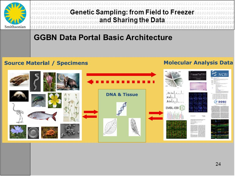24 Genetic Sampling: from Field to Freezer and Sharing the Data GGBN Data Portal Basic Architecture