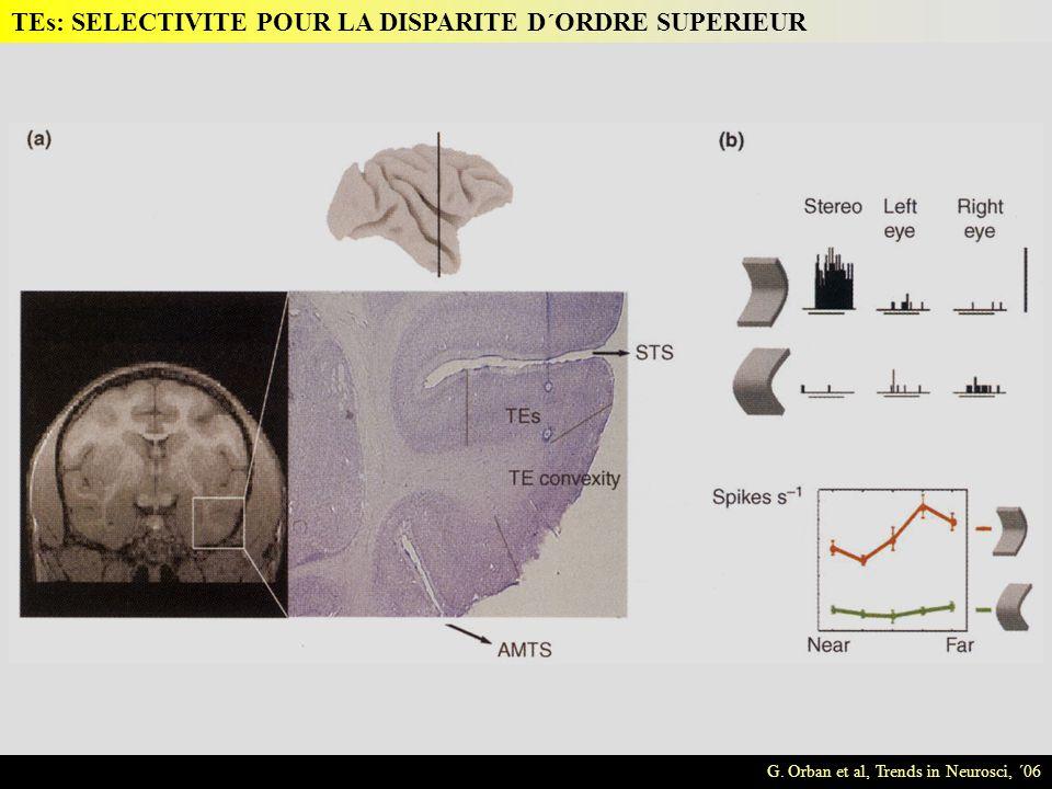 G. Orban et al, Trends in Neurosci, ´06 TEs: SELECTIVITE POUR LA DISPARITE D´ORDRE SUPERIEUR