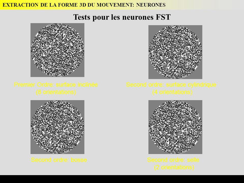 Premier Ordre: surface inclinée (8 orientations) Second ordre: surface cylindrique (4 orientations) Second ordre: bosseSecond ordre: selle (2 orientations) EXTRACTION DE LA FORME 3D DU MOUVEMENT: NEURONES Tests pour les neurones FST