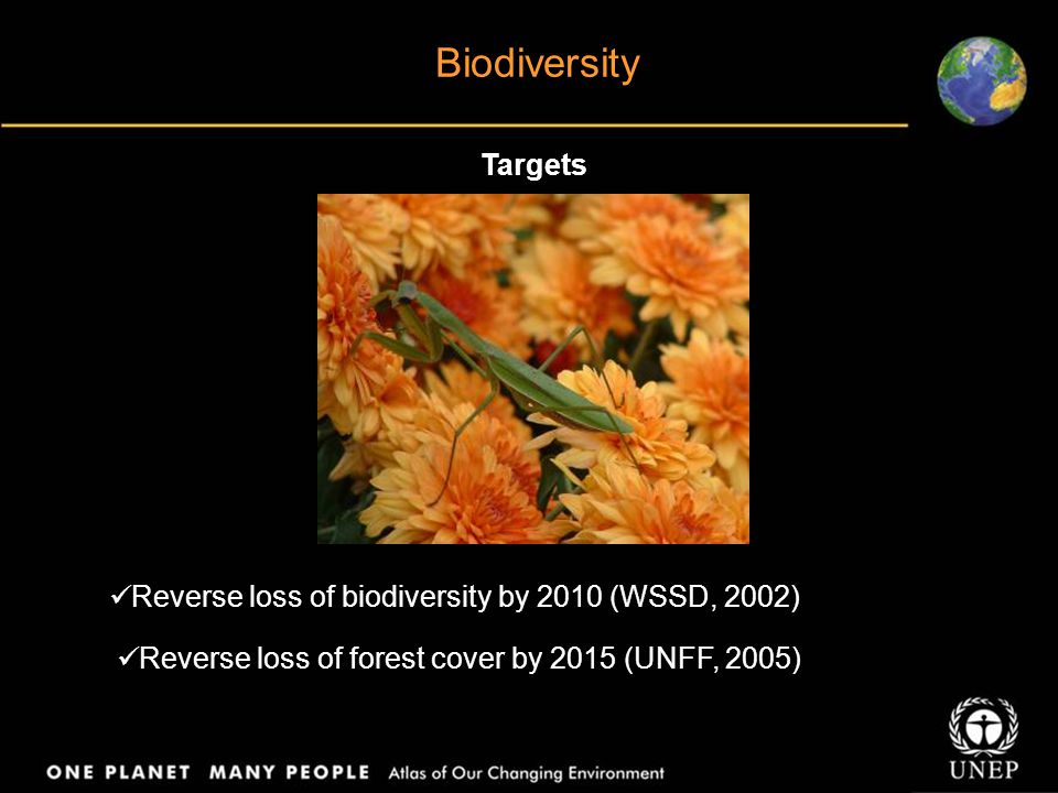 Biodiversity Targets Reverse loss of biodiversity by 2010 (WSSD, 2002) Reverse loss of forest cover by 2015 (UNFF, 2005)