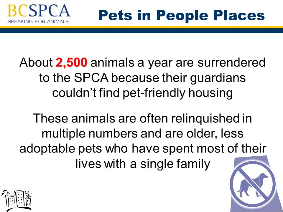 SPEAKING FOR ANIMALS 2,500 About 2,500 animals a year are surrendered to the SPCA because their guardians couldn't find pet-friendly housing These animals are often relinquished in multiple numbers and are older, less adoptable pets who have spent most of their lives with a single family Pets in People Places