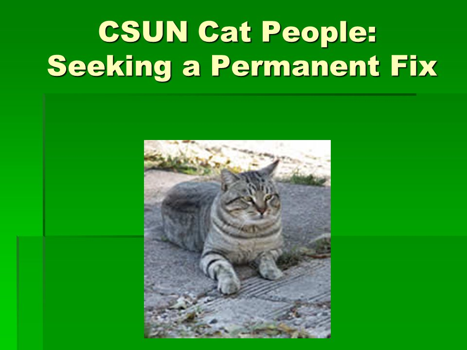 CSUN Cat People: Seeking a Permanent Fix