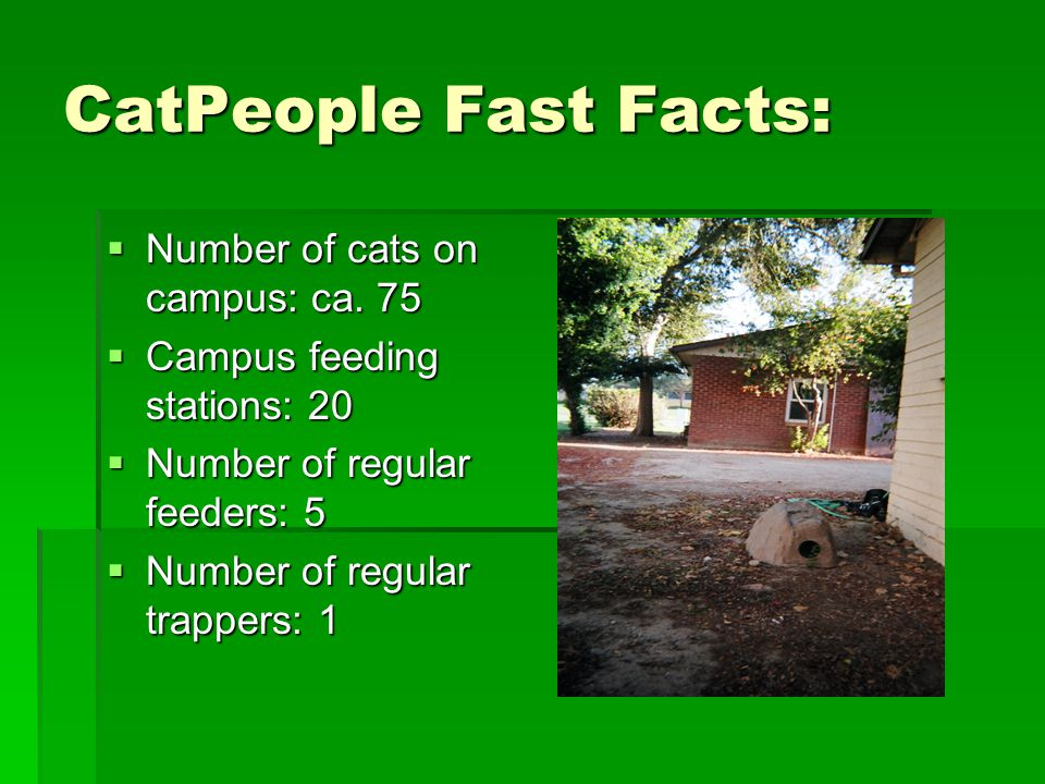 CatPeople Fast Facts:  Number of cats on campus: ca.