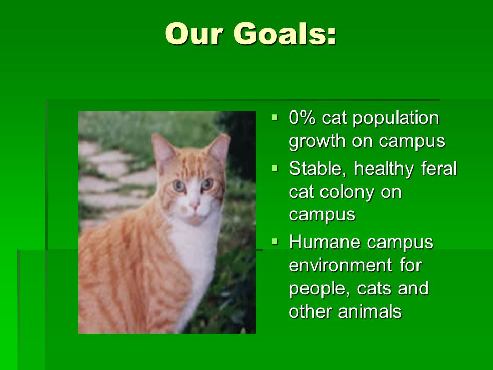 Our Goals:  0% cat population growth on campus  Stable, healthy feral cat colony on campus  Humane campus environment for people, cats and other animals