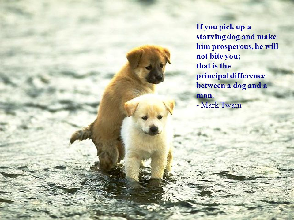 If you pick up a starving dog and make him prosperous, he will not bite you; that is the principal difference between a dog and a man. - Mark Twain