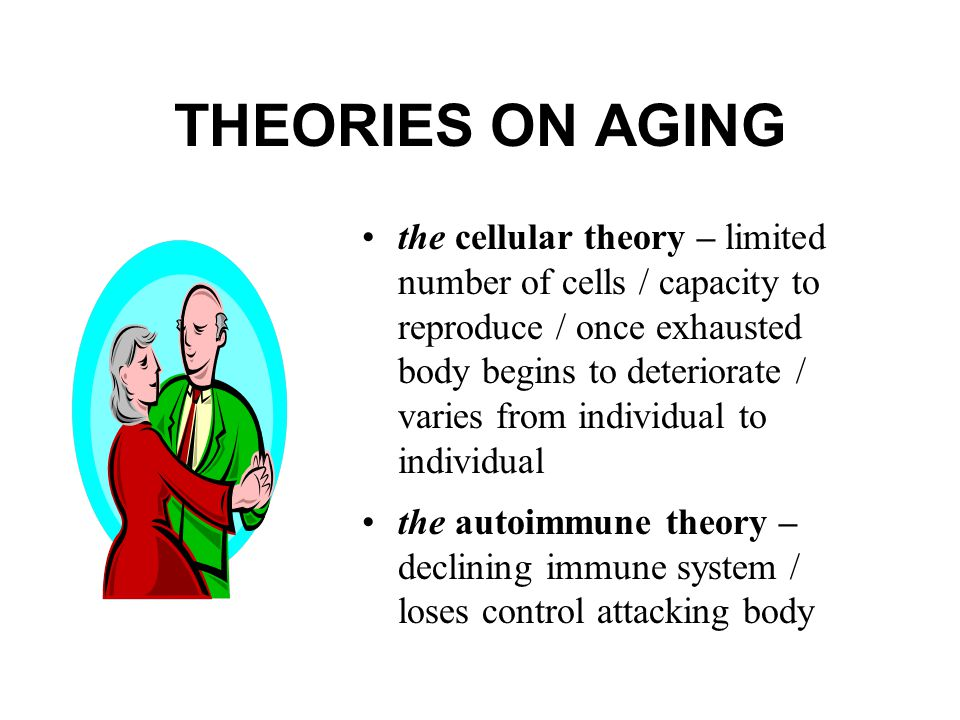 THEORIES ON AGING the cellular theory – limited number of cells / capacity to reproduce / once exhausted body begins to deteriorate / varies from individual to individual the autoimmune theory – declining immune system / loses control attacking body