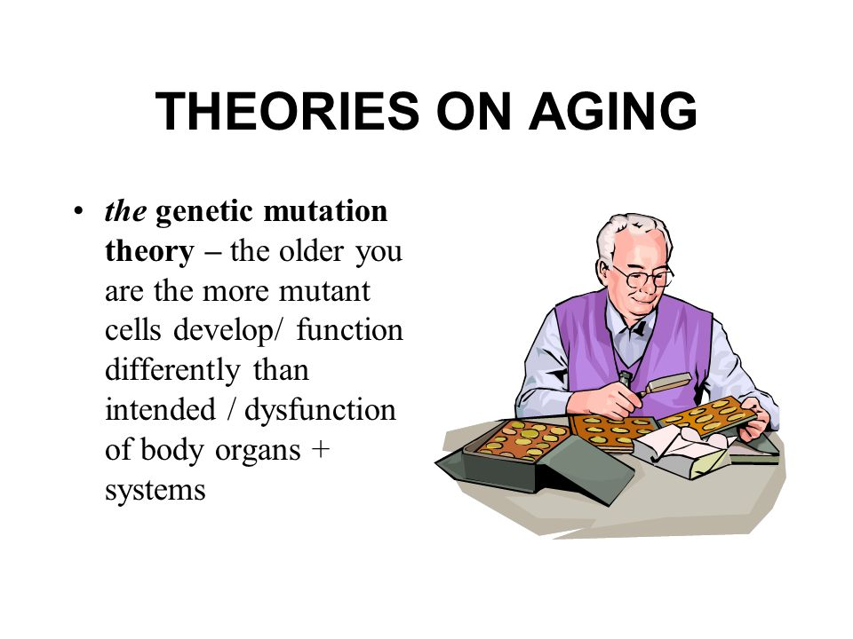 THEORIES ON AGING the genetic mutation theory – the older you are the more mutant cells develop/ function differently than intended / dysfunction of body organs + systems