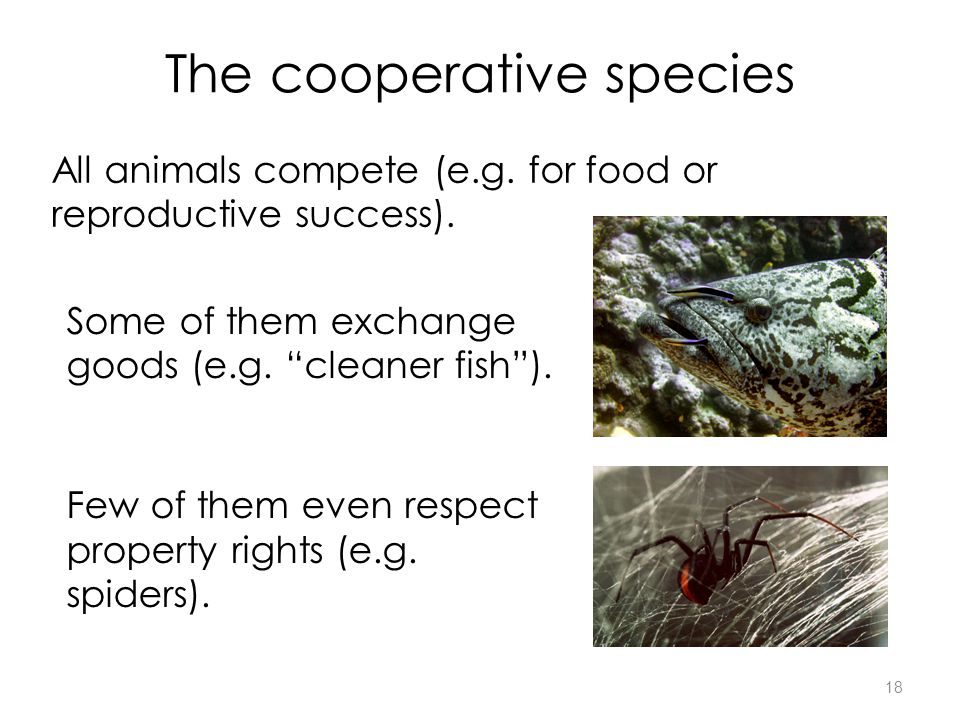 18 The cooperative species All animals compete (e.g.