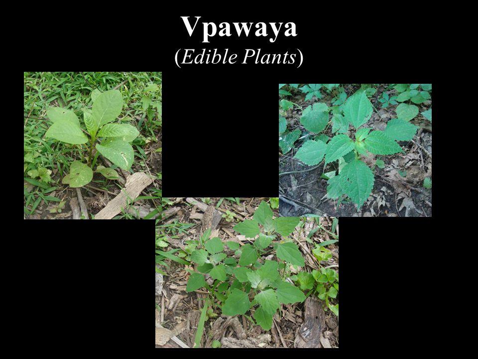 Vpawaya (Edible Plants)