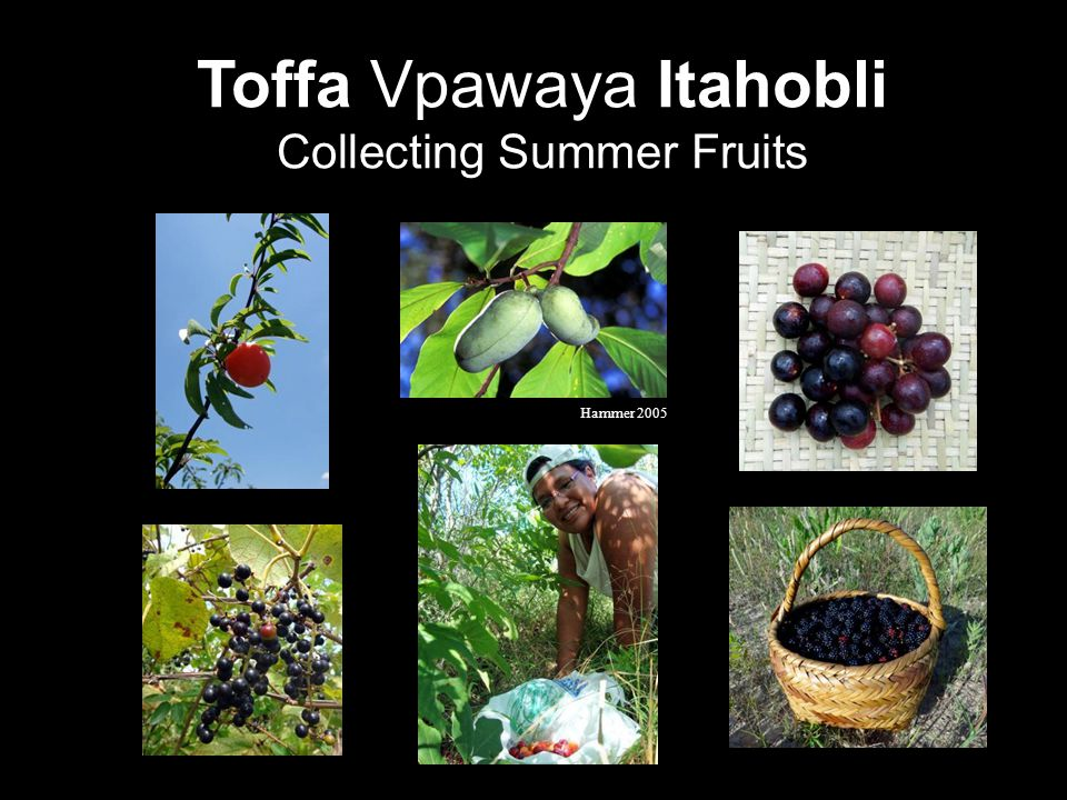 Toffa Vpawaya Itahobli Collecting Summer Fruits Hammer 2005