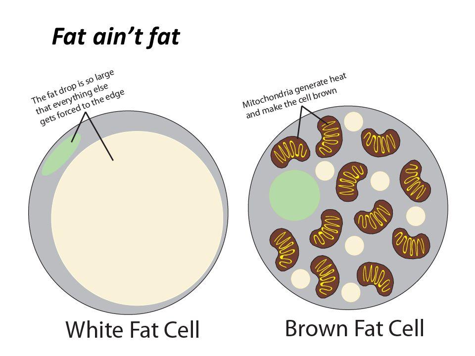 Fat ain't fat