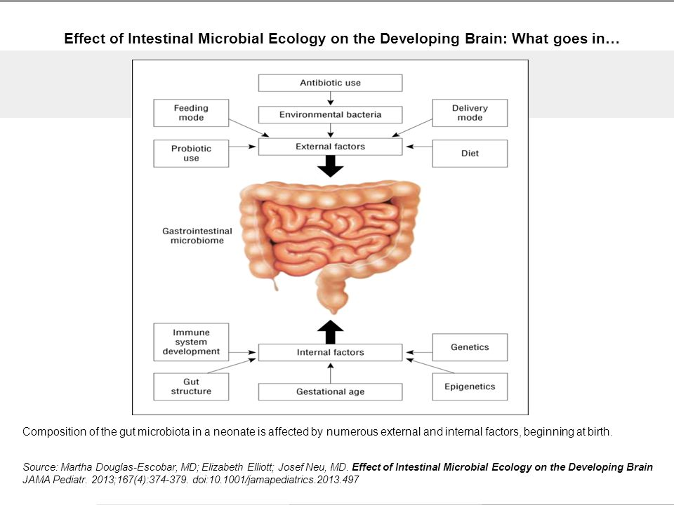 Effect of Intestinal Microbial Ecology on the Developing Brain: What goes in… Source: Martha Douglas-Escobar, MD; Elizabeth Elliott; Josef Neu, MD.
