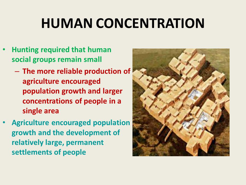 HUMAN CONCENTRATION Hunting required that human social groups remain small – The more reliable production of agriculture encouraged population growth and larger concentrations of people in a single area Agriculture encouraged population growth and the development of relatively large, permanent settlements of people