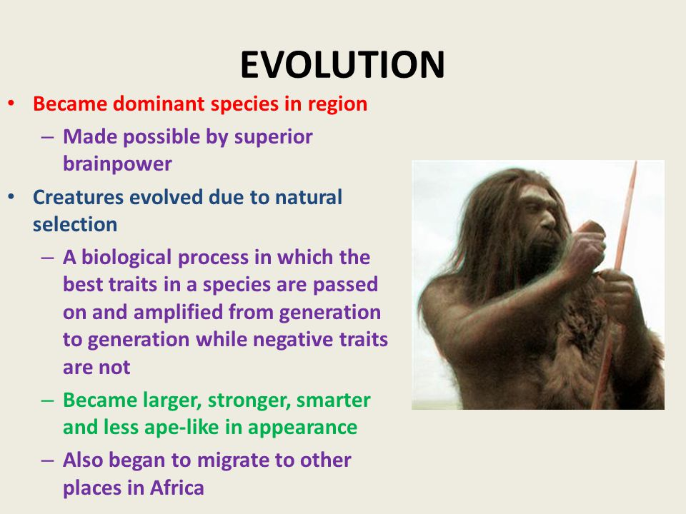 EVOLUTION Became dominant species in region – Made possible by superior brainpower Creatures evolved due to natural selection – A biological process in which the best traits in a species are passed on and amplified from generation to generation while negative traits are not – Became larger, stronger, smarter and less ape-like in appearance – Also began to migrate to other places in Africa