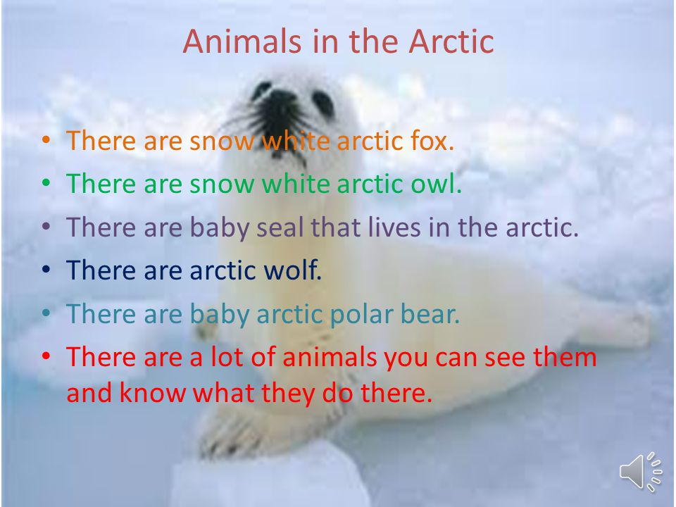 What the Homes look like in the Arctic They are made out of ice and snow if I live in one I would not like it at all.