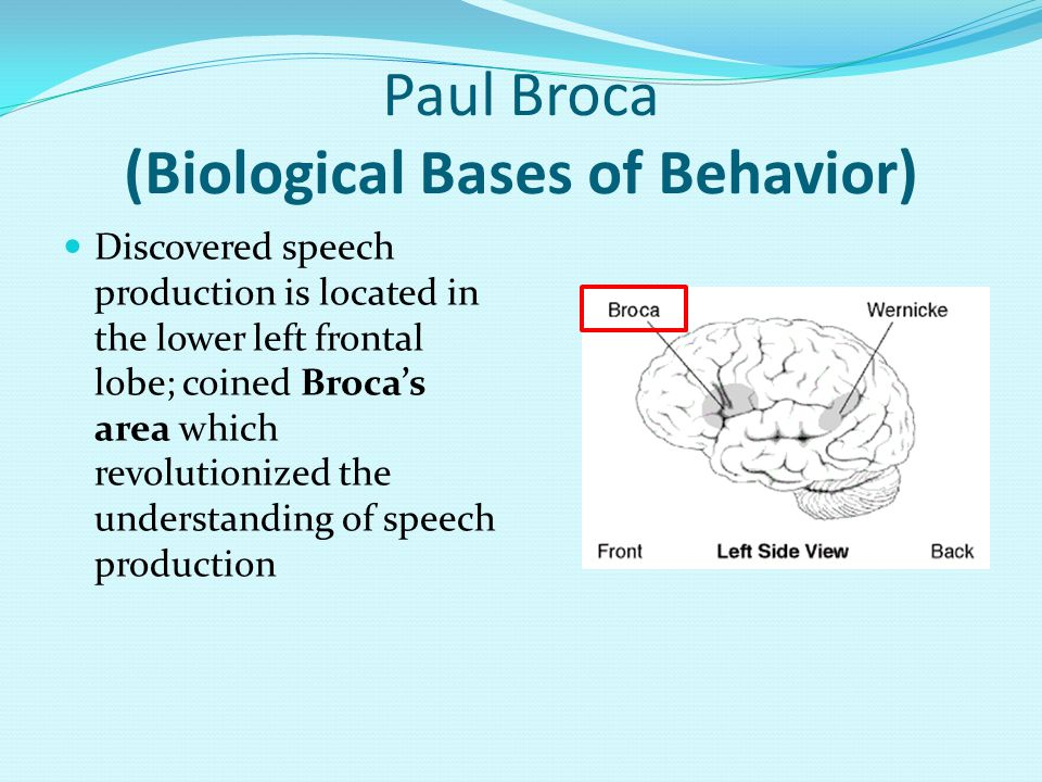 Paul Broca (Biological Bases of Behavior) Discovered speech production is located in the lower left frontal lobe; coined Broca's area which revolutionized the understanding of speech production