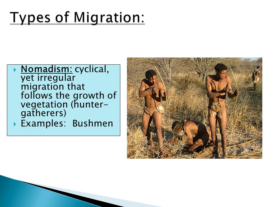  Nomadism: cyclical, yet irregular migration that follows the growth of vegetation (hunter- gatherers)  Examples: Bushmen