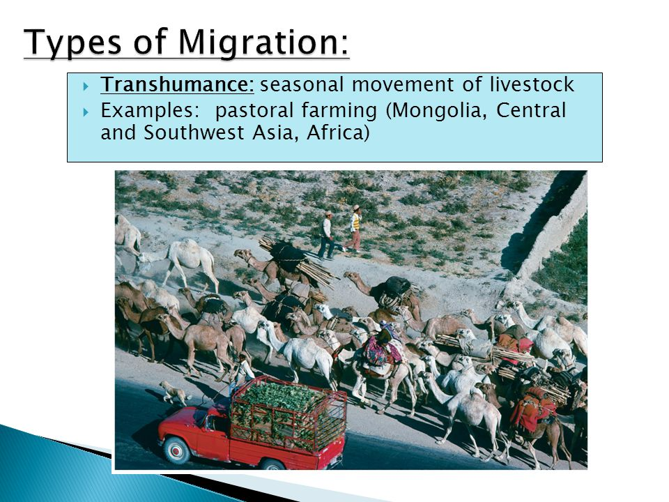  Transhumance: seasonal movement of livestock  Examples: pastoral farming (Mongolia, Central and Southwest Asia, Africa)