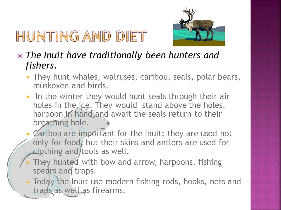  The Inuit have traditionally been hunters and fishers.  They hunt whales, walruses, caribou, seals, polar bears, muskoxen and birds.  In the winte
