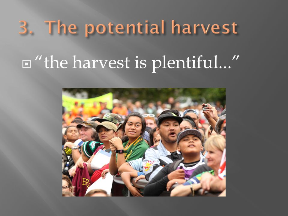  the harvest is plentiful...