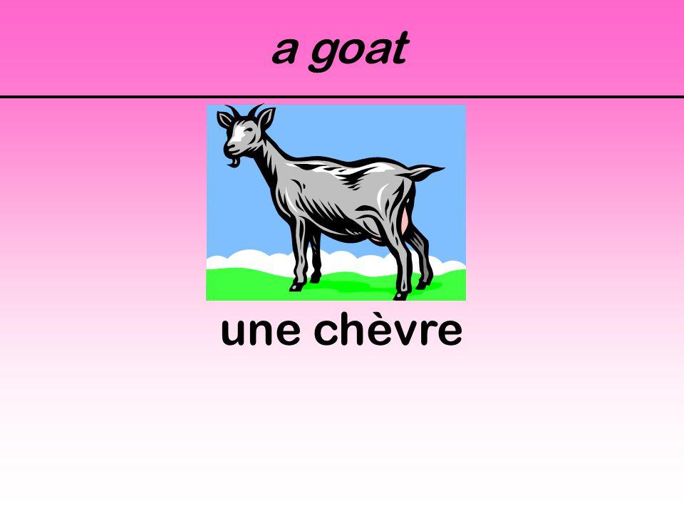 a goat une chèvre