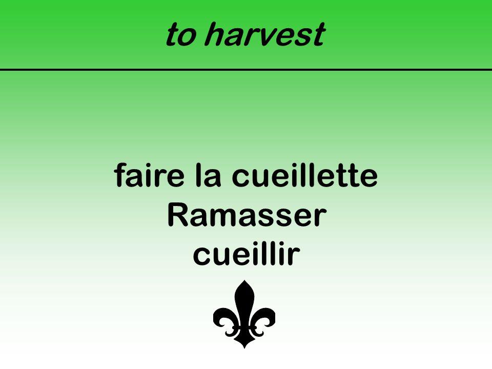 to harvest faire la cueillette Ramasser cueillir