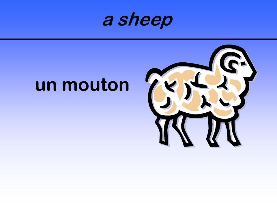 a sheep un mouton