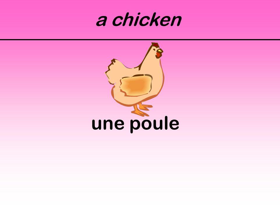 a chicken une poule