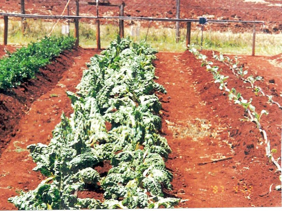 What Organization What Organization can purchase hundreds of can purchase hundreds of pounds of vegetables and pounds of vegetables and deliver them t