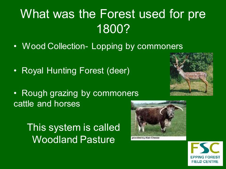 What was the Forest used for pre 1800.