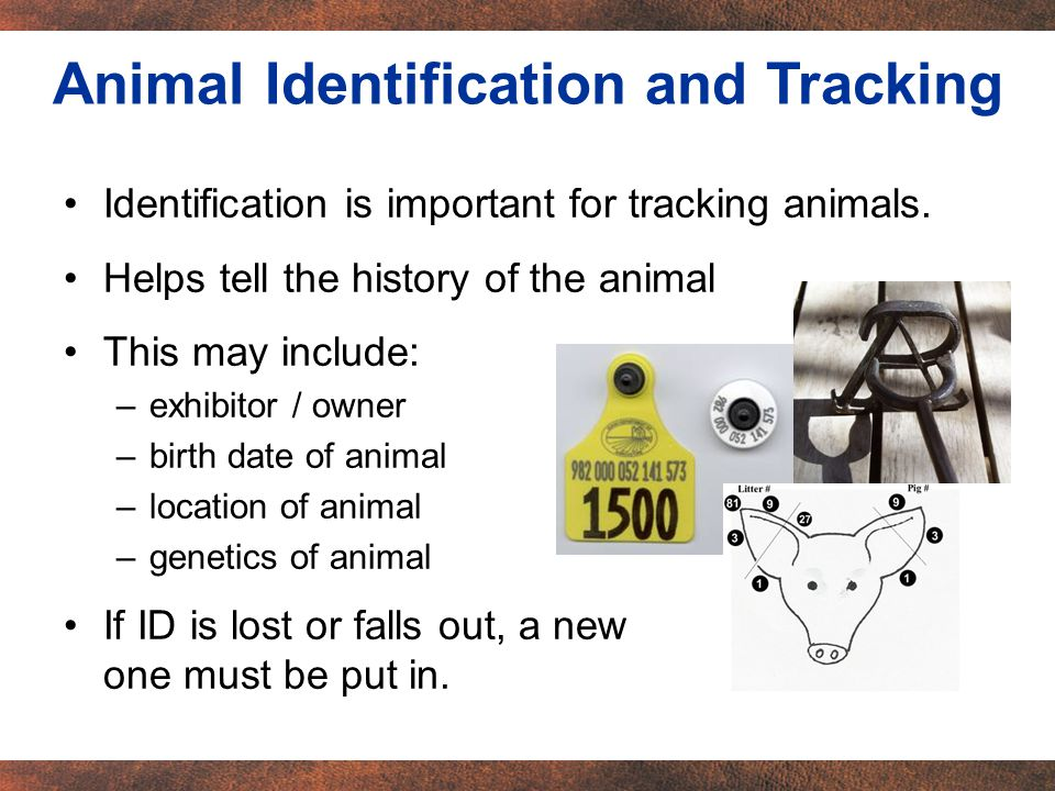 Identification is important for tracking animals.