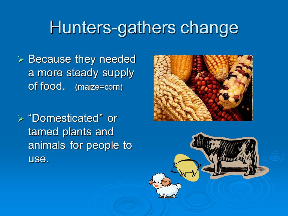 Hunters-gathers change  Because they needed a more steady supply of food.
