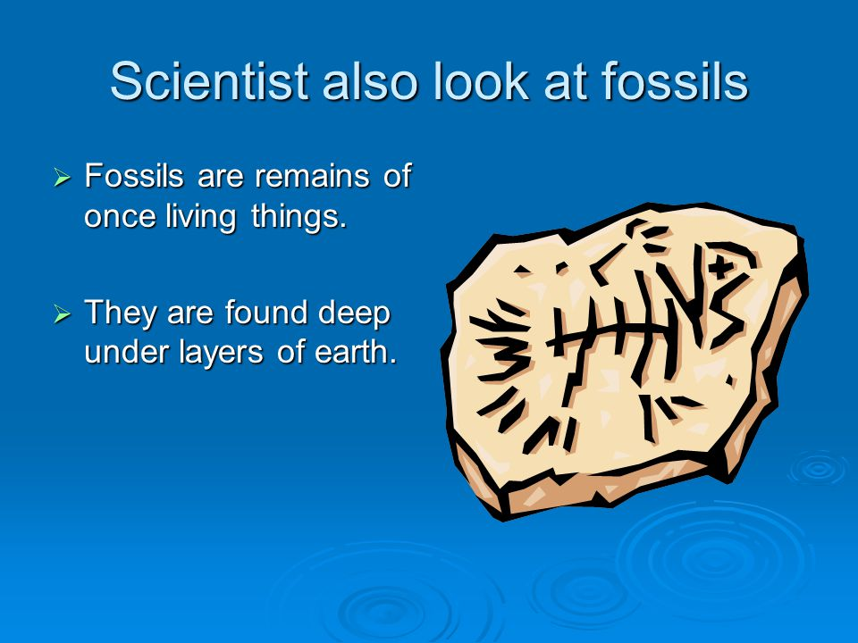 Scientist also look at fossils  Fossils are remains of once living things.  They are found deep under layers of earth.
