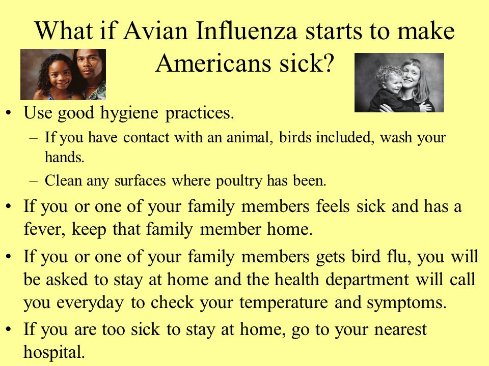 What if Avian Influenza starts to make Americans sick? Use good hygiene practices. –If you have contact with an animal, birds included, wash your hand