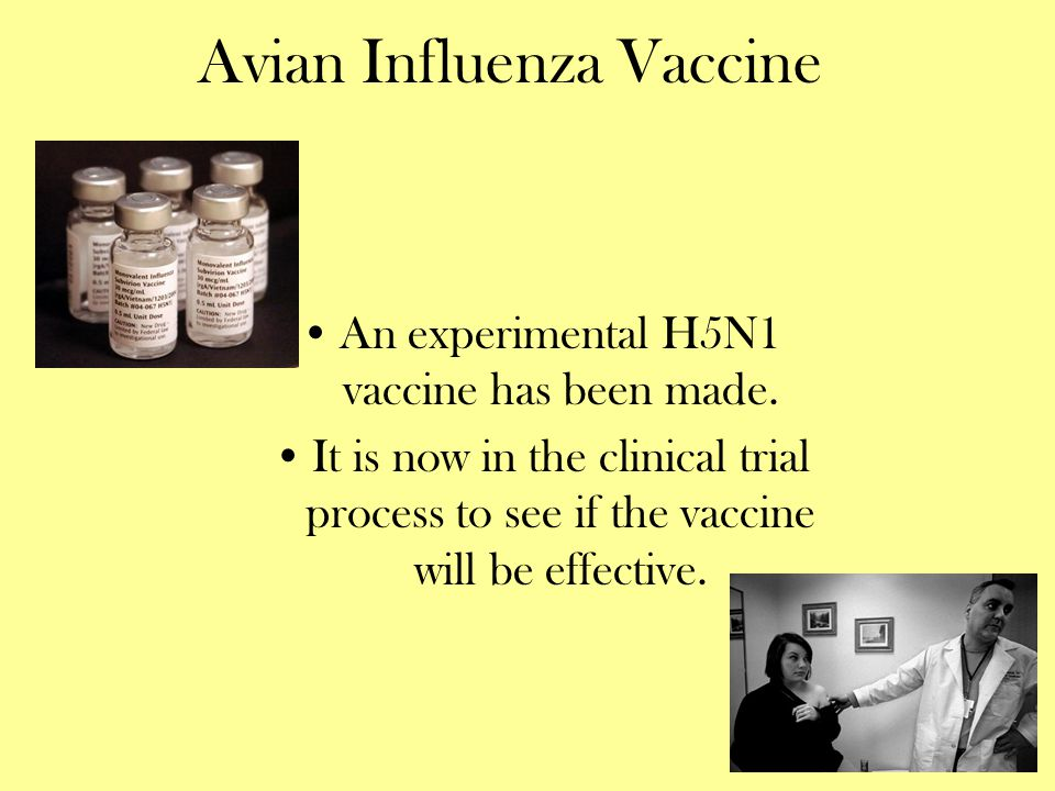 Avian Influenza Vaccine An experimental H5N1 vaccine has been made. It is now in the clinical trial process to see if the vaccine will be effective.