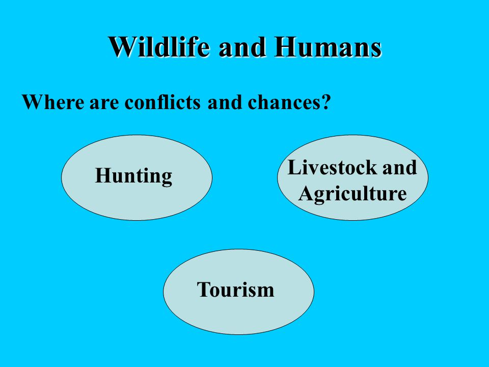 Wildlife and Humans Where are conflicts and chances Hunting Livestock and Agriculture Tourism