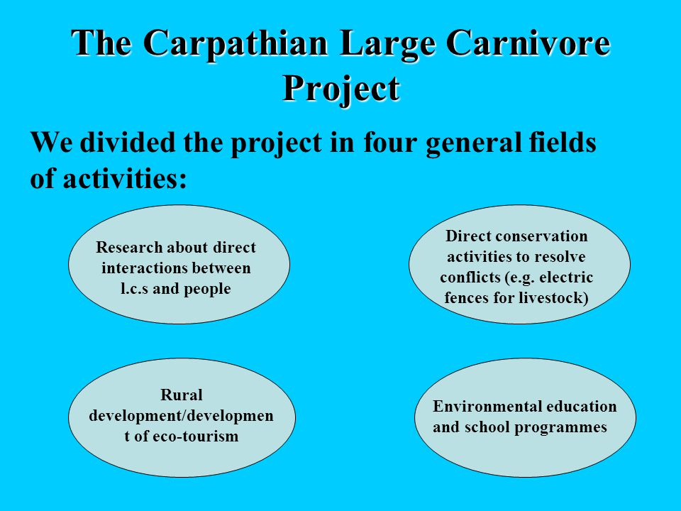 The Carpathian Large Carnivore Project We divided the project in four general fields of activities: Research about direct interactions between l.c.s and people Direct conservation activities to resolve conflicts (e.g.