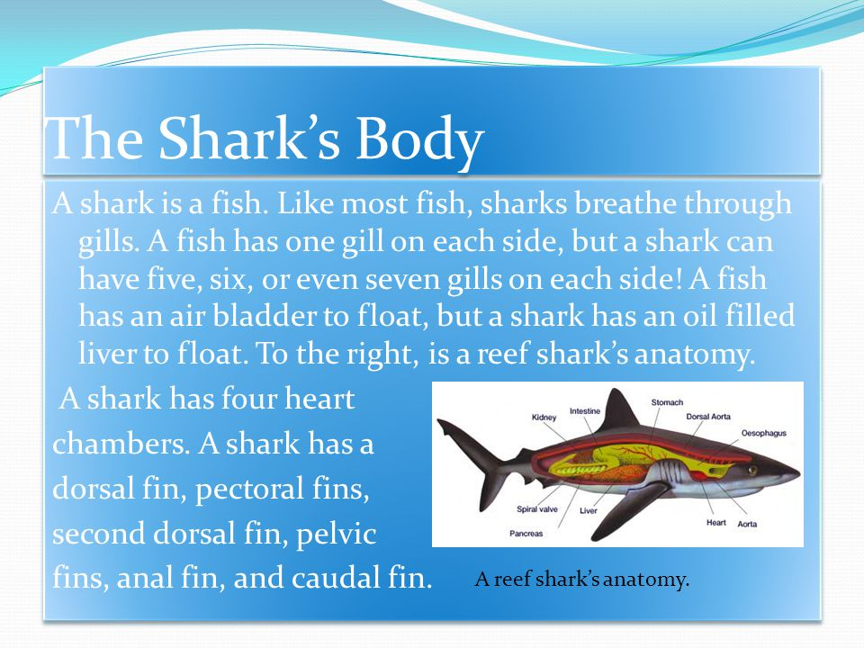 Introduction Sharks are fierce predators.