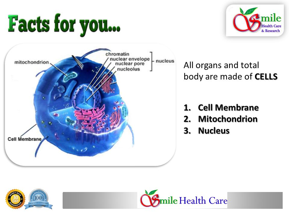 1.Cell Membrane 2.Mitochondrion 3.Nucleus CELLS All organs and total body are made of CELLS
