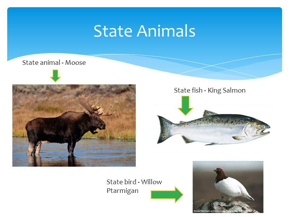 State Animals State animal - Moose State fish - King Salmon State bird - Willow Ptarmigan