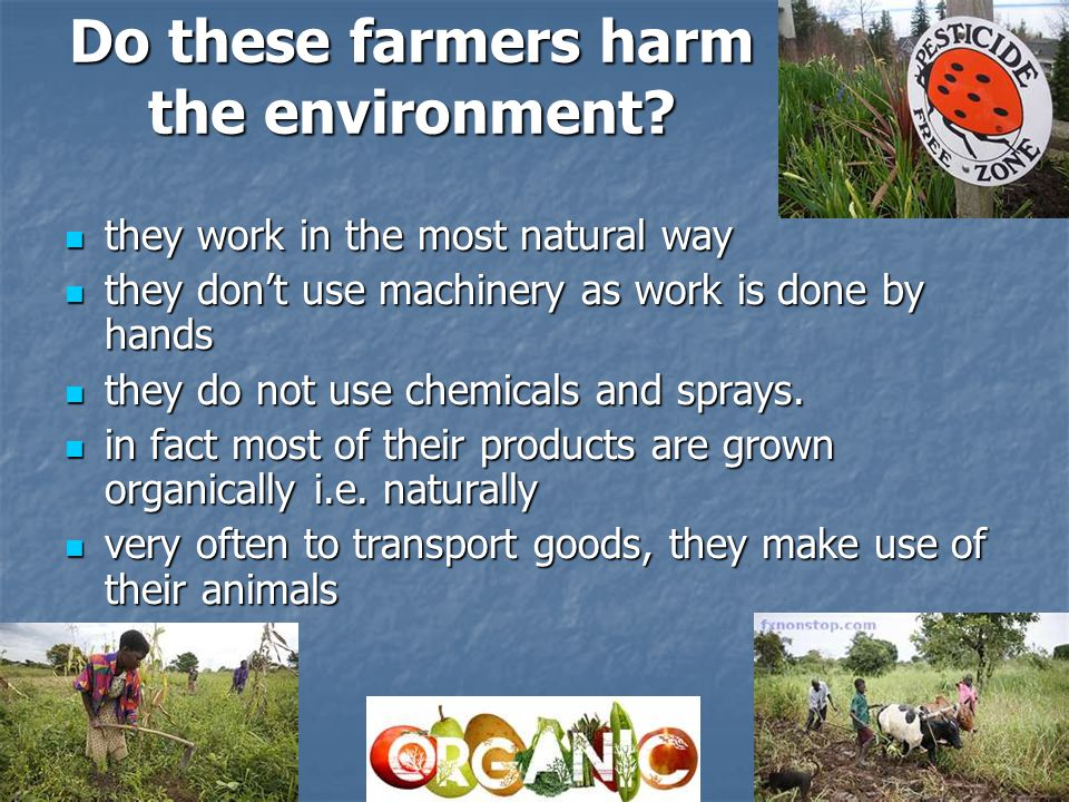 Do these farmers harm the environment.
